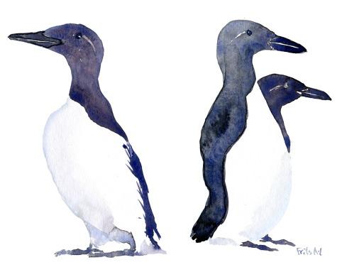 Lomvie fugl i akvarel