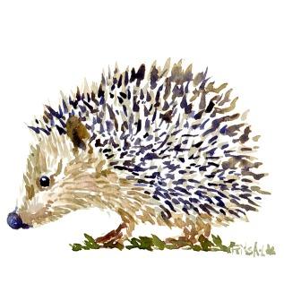Pindsvin - akvarel