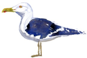 Måge akvarel