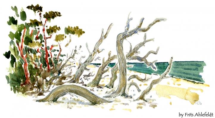 Træer på strand, akvarel af Frits Ahlefeldt